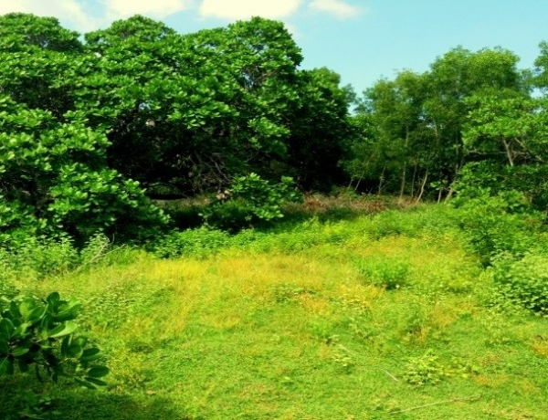 Views of the new Auroville land – all thanks to your generosity!