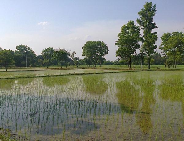 Developing Auroville's biggest farm