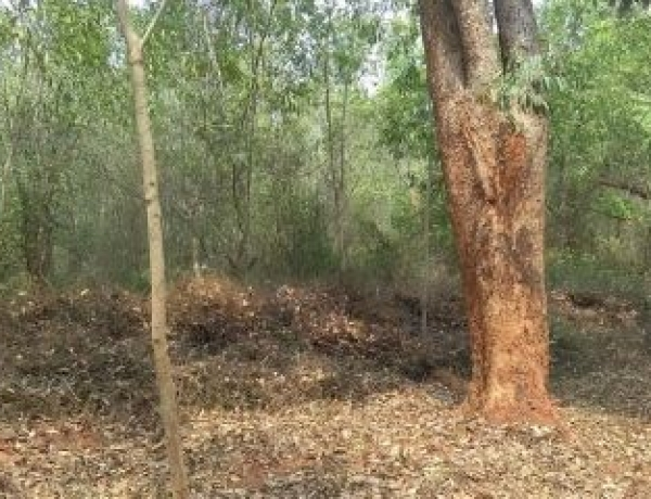 New Auroville Land Thanks to Your Donations