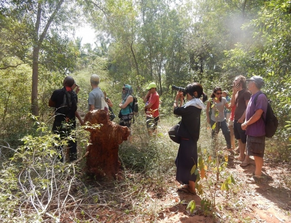 Planting a forest – pioneering 1981 and 2017